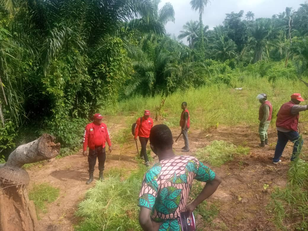 NDLEA destroy N1.5B worth of marijuana farm in Kogi