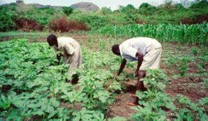 Farmers raise alarm as insecurity threatens food availability