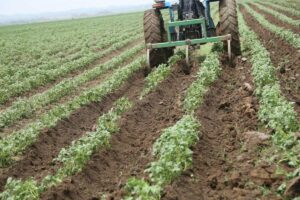 FG to explore opportunities in Potato Value Chain