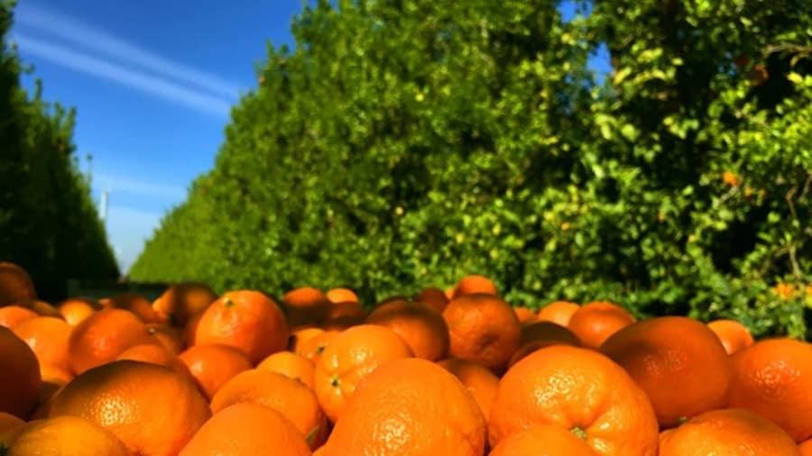 Zimbabwe to export citrus fruits to China