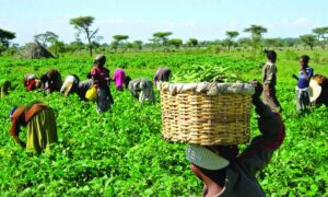 PAFO and AGRA sign MoU to support smallholder farmers
